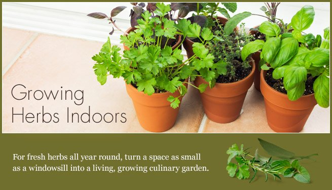 article-growing_herbs_indoor
