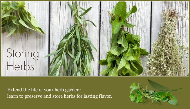 article-storing_herbs